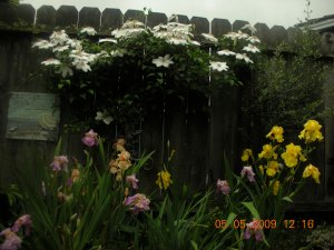 The Garden on the 5th of May, 2009