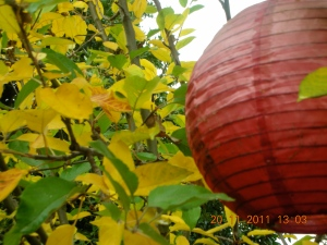 The Apple Tree in the Fall