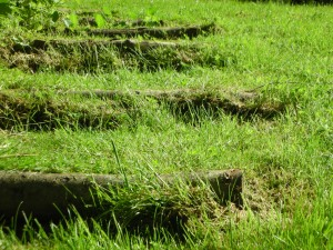 Steps by the castle at Hawthornden:  June 2012
