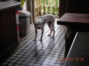 """In addition to self's fascination with:  a) windows, b) flowers, self is also fascinated by dogs.  This one was in Monsignor """"Gigi"""" Gaston's house in Manapla."""