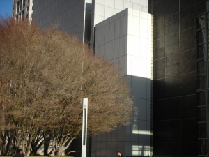 There was a tree in front of one of the Yerba Buena Art Center buildings; she doesn't know what kind.