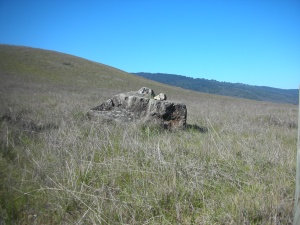 A hill in Edgewood Nature Preserve, Redwood City