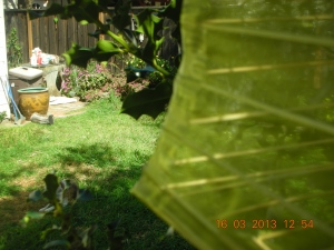 The Garden Today (Bella aka The Ancient One is in lower left-hand corner)
