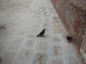 Pigeons, some alley in Venice