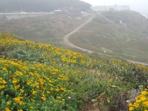 Above Sutro Baths.  Do you see how lovely the San Francisco weather can be in June?