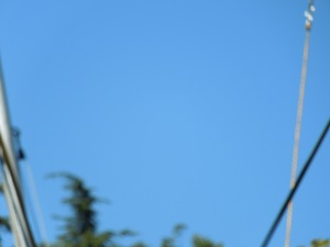 Attempt 1:  It is very hard to take a picture of someone bungee jumping!