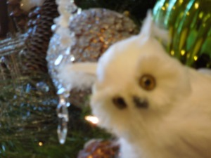 The Christmas Tree in Filoli was smothered by Christmas ornaments, but for some reason self zoomed in on this owl.