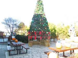Main Street, Downtown Half Moon Bay:  The plaza had a large Christmas tree.