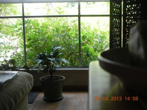 The View From the Picture Window in the Living Room