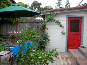 The Red Door to the Shed:  It used to be dark brown. Self decided to paint it red over a decade ago.