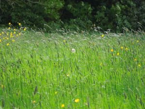 Tall Grass on a Windy Day:  The Tyrone Guthrie Center at Annaghmakerrig
