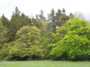 Woods, Annaghmakerrig, Spring