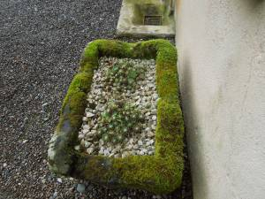Cactus in a Stone Planter Framed with Moss:  This intriguing arrangement is right by the back door to the Main House at the Tyrone Guthrie Centre.
