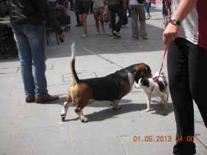 Doggie Love, Trieste:  May 2013