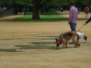 """The """"Meadow"""" Next to Christ Church is bordered by a wide promenade. How the dogs loved the puddles!"""