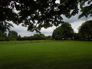 A meadow along Abingdon Road, Oxford