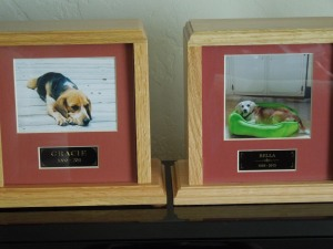 Once upon a time. self had two little beagles, and their names were Bella and Gracie:  Gracie, the younger, died first, in 2011.  Bell reached the great old age of 17 dog years, and died last October.