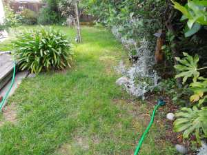 Backyard Watering: Takes Endurance, especially in the summer.
