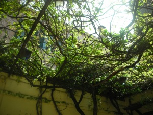 Vine-colored Trellis, Restaurant in Venice: May 2013
