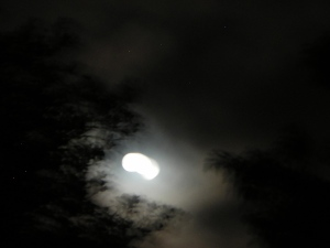 Ghostly Moon, Backyard