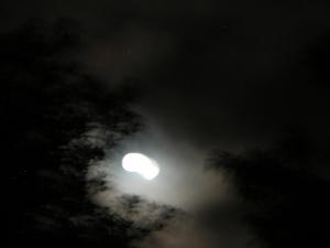 Ghostly Moon, Backyard