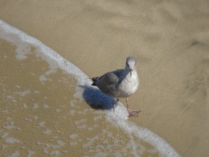 Sand, Sea and Bird in Venice Beach, California