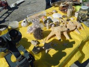At the end of the Venice Beach Pier:  An Educational Display From the Venice Beach Oceanarium