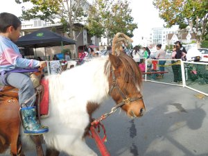 Yesterday, we ogled the animals in the petting zoo in Redwood City's Courthouse Square. There were pony rides!