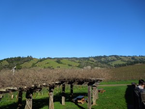 The symmetrical hills! This is from Navarro Winery on Route 128.