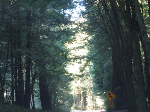 Route 128: This looks like more of the same shot, but self assures you it isn't.