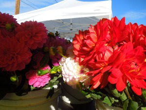 More flowers at the Redwood City Farmers Market