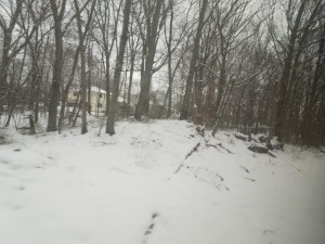 Fresh Snow: Spring 2015