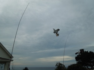 Kite, Mendocino