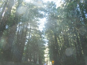 Giant Redwoods, on CA-128 north
