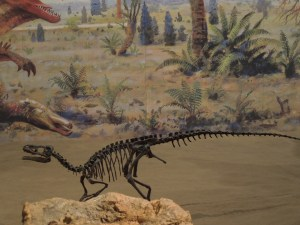 Tiny dinosaur on rock faces stiff competition