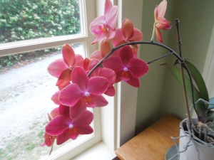 Orchids are so vivid!