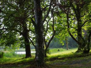 The Meadow by the Lake at Annaghmakerrig
