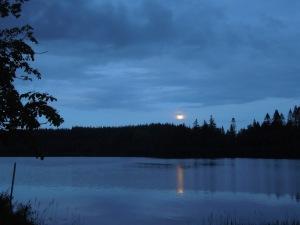 Lake, Annaghmakerrig, Ireland: July 2015