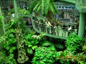 Beautiful place, the California Academy of Sciences is.