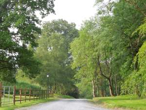 The Main Drive, Tyrone Guthrie Centre, Annaghmakerrig