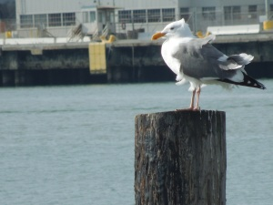 2014 Codex International Book Fair in Benicia, CA: And Self Takes Pictures of Solitary Seagulls