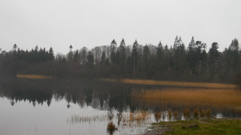 The Forest Seen From the Lake: Early March