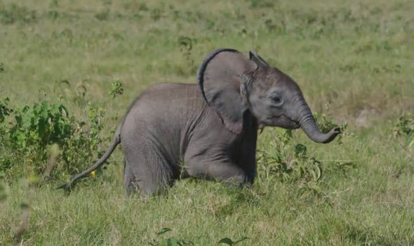 Elephant-gets-lost-762424